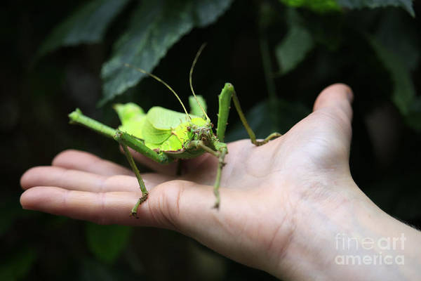 Wall Art - Photograph - Jungle Nymph by Charline Xia
