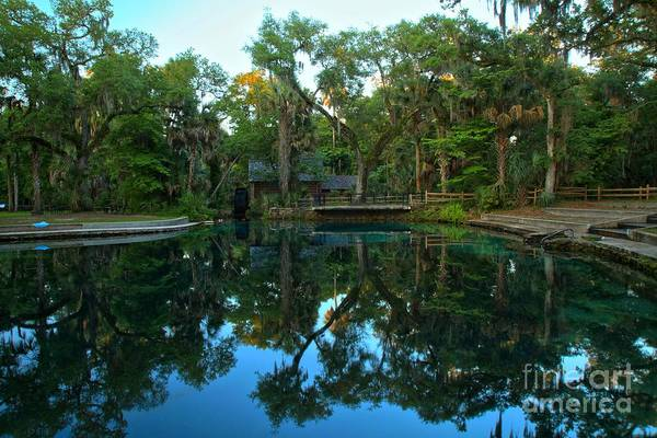 Photograph - Juniper Springs Pool Reflections by Adam Jewell