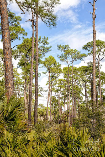 Wall Art - Photograph - Ancient Looking Florida Forest At Aubudon Corkscrew Swamp Sanctuary by William Kuta