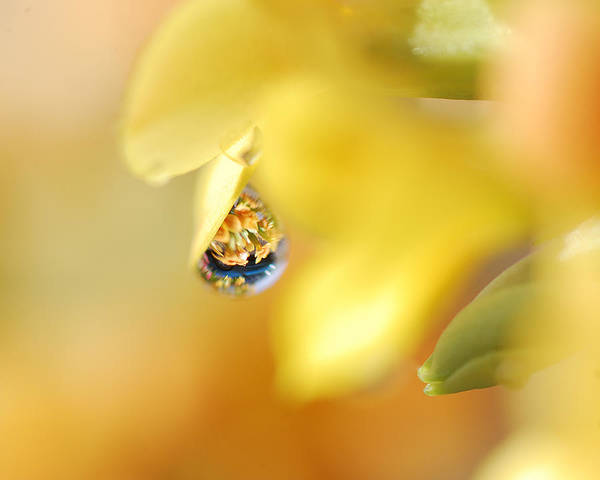 Refraction Wall Art - Photograph - Just A Drop Of Spring by Susan Capuano