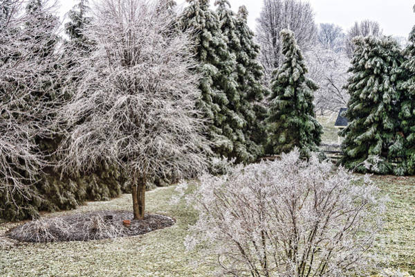 Wall Art - Photograph - Ice Coating Trees And Lawn In A Back Yard by William Kuta