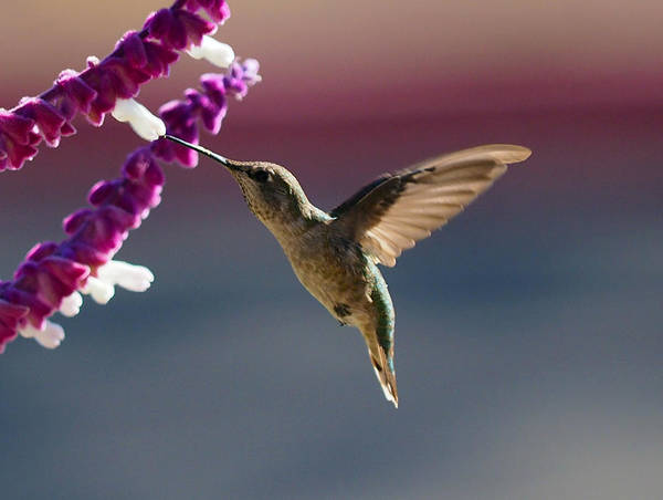 Suspended Photograph - Just A Kiss by Joe Schofield