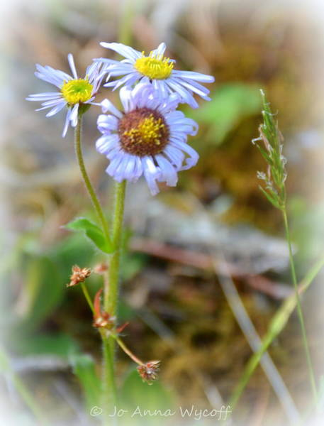 Wall Art - Photograph - Just A Little Weed by Jo Anna Wycoff