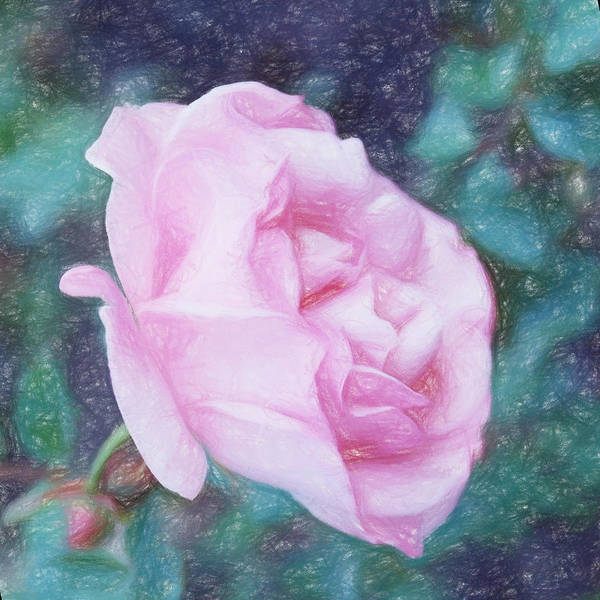 Photograph - Just A Rose In The Garden by HW Kateley