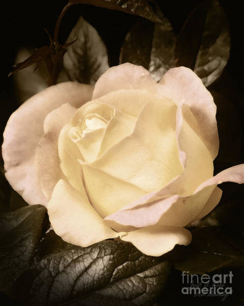 Photograph - Just A Rose by Lee Owenby