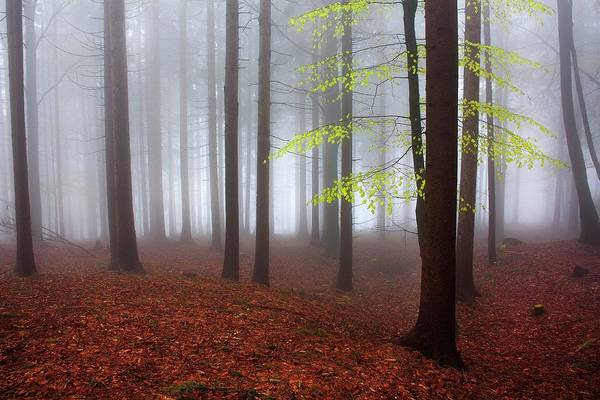 Misty Photograph - Just Awakened by Kristjan Rems