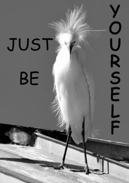 Just Birds Photograph - Just Be Yourself by David Lee Thompson