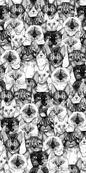 Kitten Drawing - Just Cats by MGL Meiklejohn Graphics Licensing