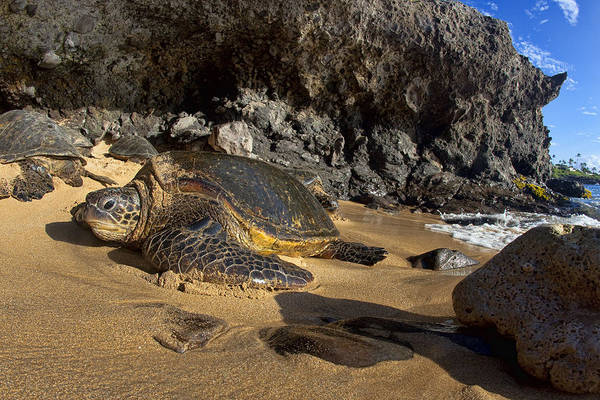 Turtle Photograph - Just Chillin by James Roemmling