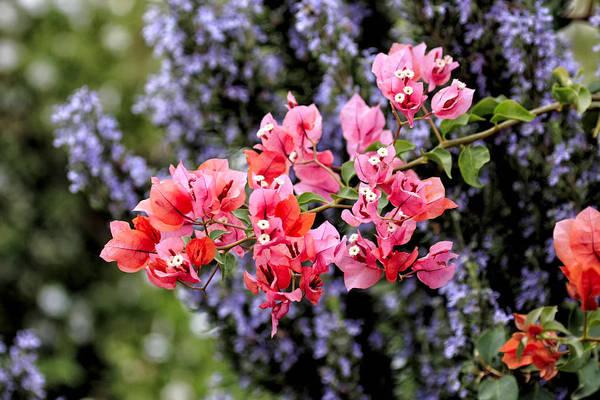 Photograph - Just Flowers II by Goyo Ambrosio