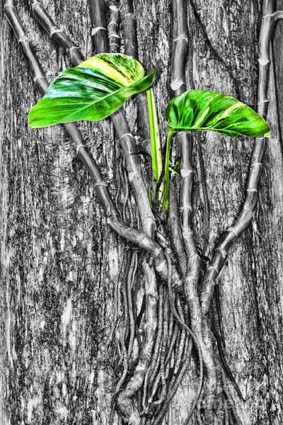 Photograph - Just Green 1 By Diana Sainz by Diana Raquel Sainz