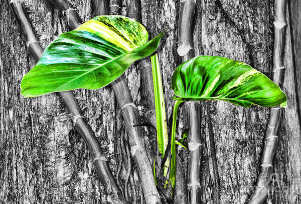 Photograph - Just Green 2 By Diana Sainz by Diana Raquel Sainz