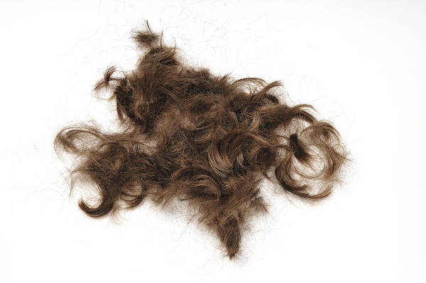 Photograph - Just Hair by Matthias Hauser