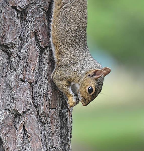 Photograph - Just Hangin Around by Lara Ellis