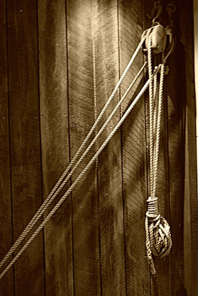 Photograph - Just Hangin' Around - Sepia by Marilyn Wilson