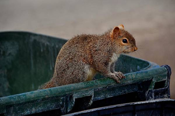 Photograph - Just Looking For My Nuts by Gerald Greenwood