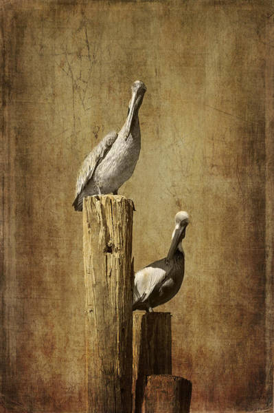 Wader Photograph - Just The Two Of Us by Kim Hojnacki