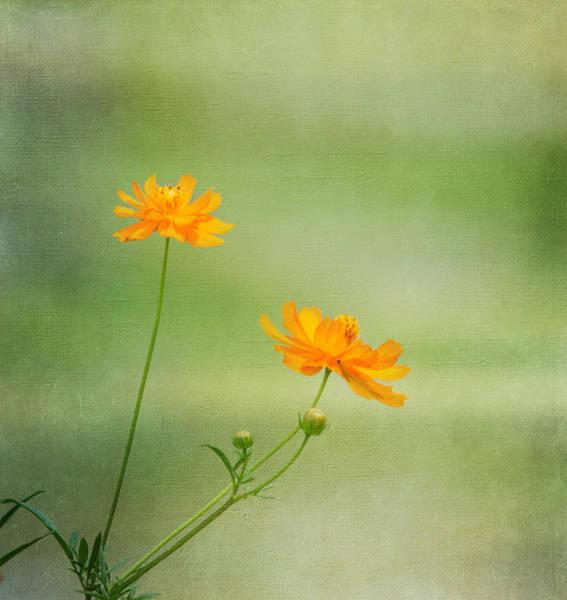 Photograph - Just Two by Kim Hojnacki