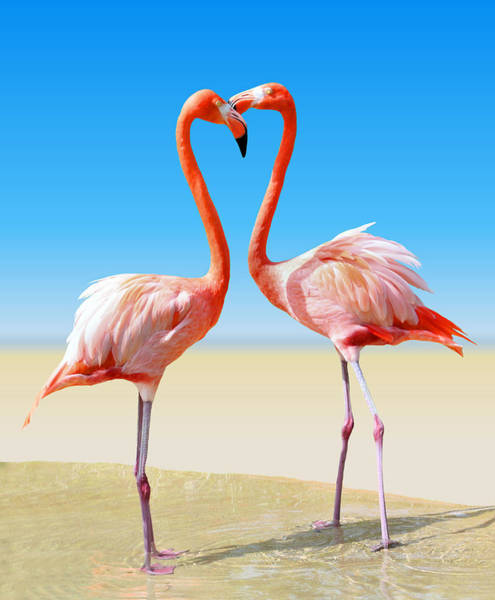 Flamingos Wall Art - Photograph - Just We Two by Kristin Elmquist