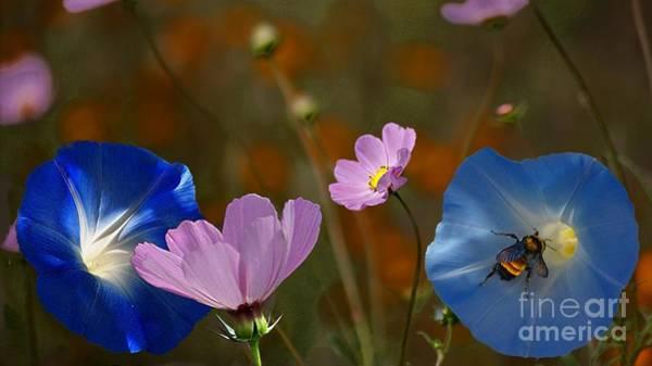 Photograph - Just Wonderful by John  Kolenberg