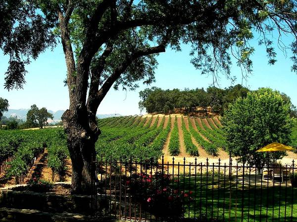 Wall Art - Photograph - Justin Vineyards Paso Robles California Wine Country Winery by Ron Bartels