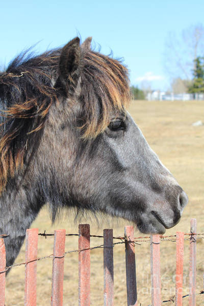 Photograph - Juvenile Horse by Donna L Munro