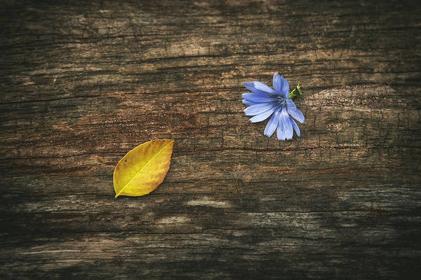 Wildflowers Wall Art - Photograph - Juxtaposition by Scott Norris