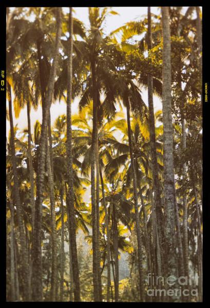 Photograph - Kahana Valley State Park by Thomas R Fletcher