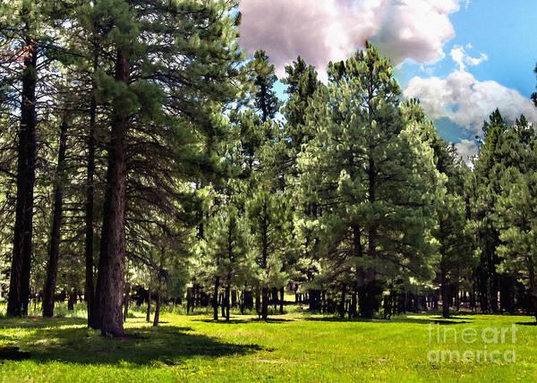 Photograph - Kaibab National Forest Ponderosa Pine by Bob and Nadine Johnston