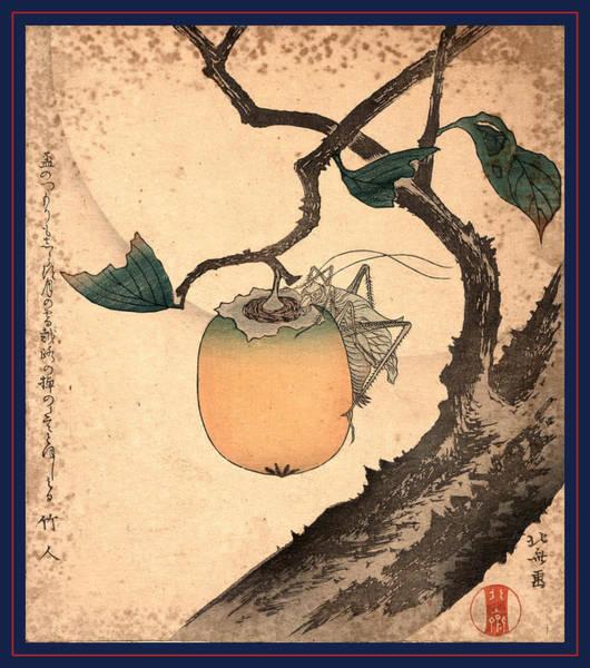 Wall Art - Drawing - Kaki Ni Kirigirisu by Hokusai, Katsushika (1760-1849), Japanese