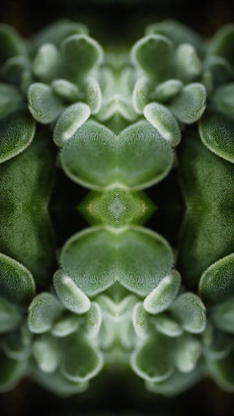 Ornate Photograph - Kaleidoscope Composite Of Butterworts by Silvia Otte