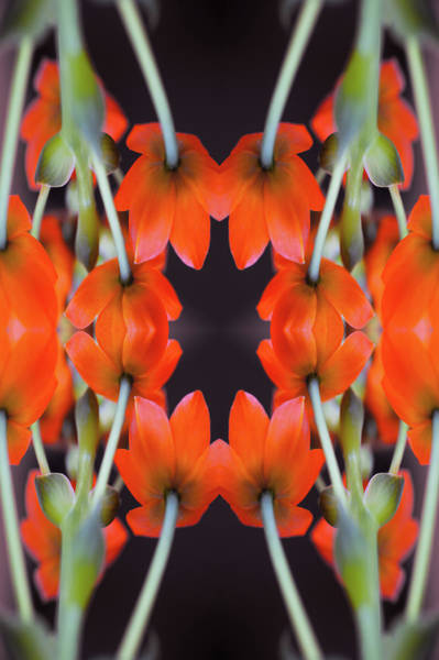 Photograph - Kaleidoscope Of Buds And Stems Of by Silvia Otte