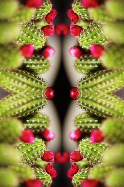 Ornate Photograph - Kaleidoscope Of Green Cactus With Red by Silvia Otte