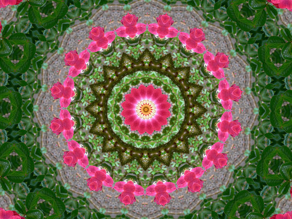 Photograph - Kaleidoscope Roses In Pink And Green by MM Anderson