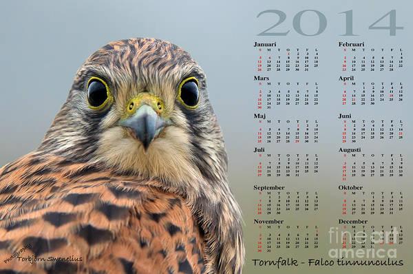 Photograph - Kalender 2014 Tornfalk by Torbjorn Swenelius