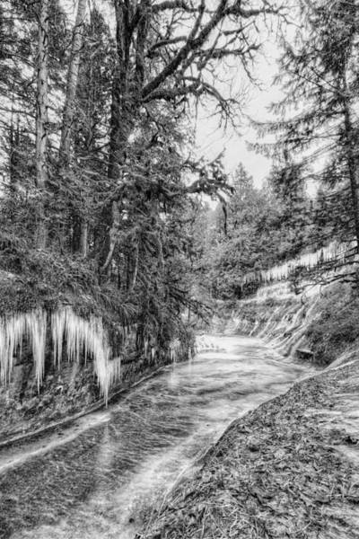 Photograph - Kanaka Creek Icicles by Paul W Sharpe Aka Wizard of Wonders