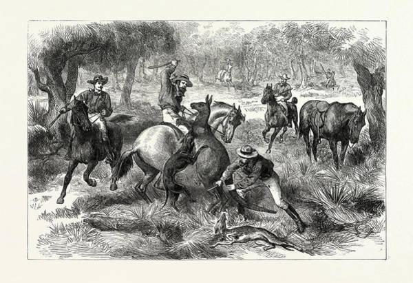 Kangaroo Drawing - Kangaroo-hunting In Australia by Australian School