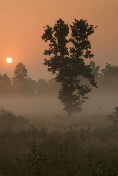 Ie Wall Art - Photograph - Kanha Np, India Early Morning, Rising by Jan and Stoney Edwards