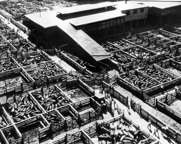 Stockyards Photograph - Kansas City Stock Yard Vintage by Retro Images Archive