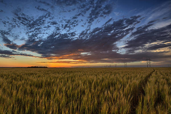 Wheat Wall Art - Photograph - Kansas Color by Thomas Zimmerman