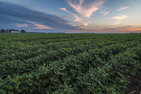 Photograph - Kansas Soybeans by Scott Bean