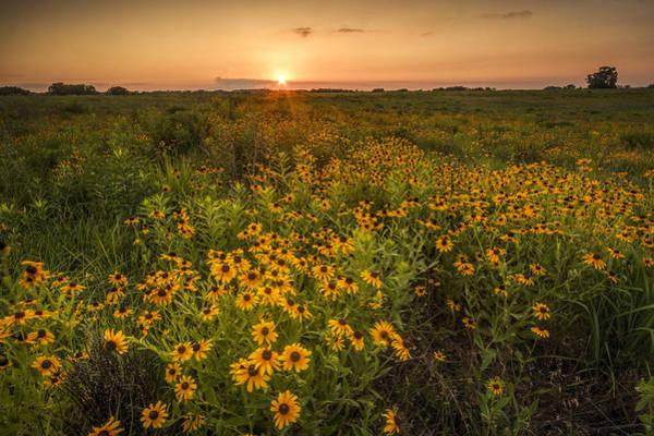 Photograph - Kansas Wildflowers by Scott Bean