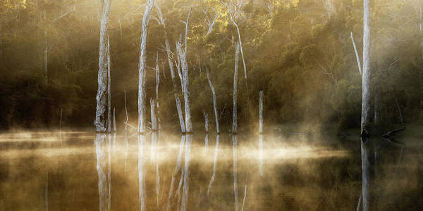 Valleys Photograph - Karri Valley by Leah Kennedy
