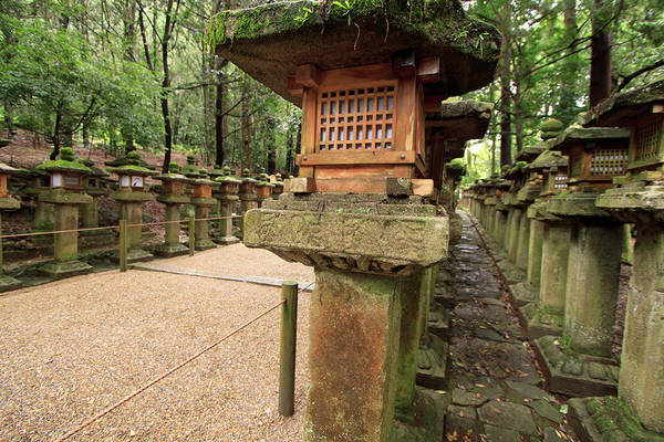 Kansai Wall Art - Photograph - Kasuga Taisha Shrine In Nara, Japan by Paul Dymond