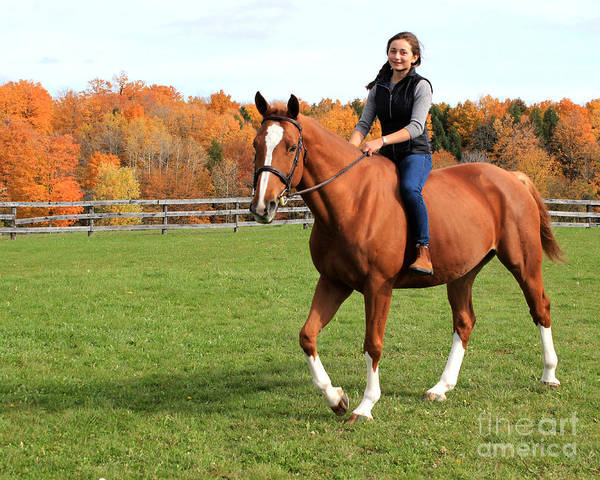 Photograph - Katherine Pal 21 by Life With Horses