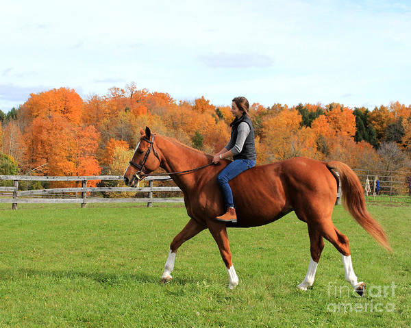 Photograph - Katherine Pal 26 by Life With Horses