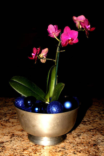 Photograph - Kathy's Orchid by Robert Morin