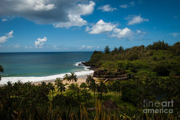 Kauai South Shore Jungle Art Print