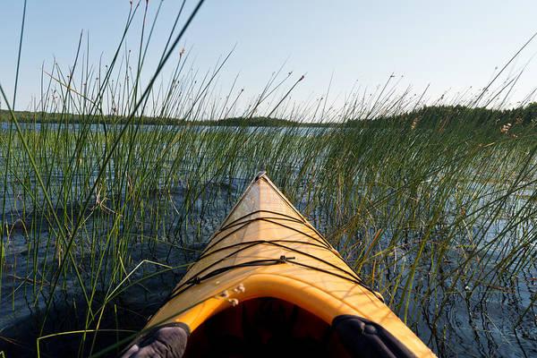 Kayaks Wall Art - Photograph - Kayaking Through Reeds Bwca by Steve Gadomski