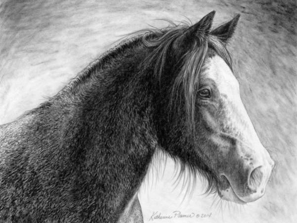 Equine Drawing - Kaylee by Katherine Plumer